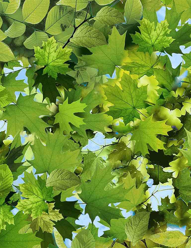 grüne Blätter allover