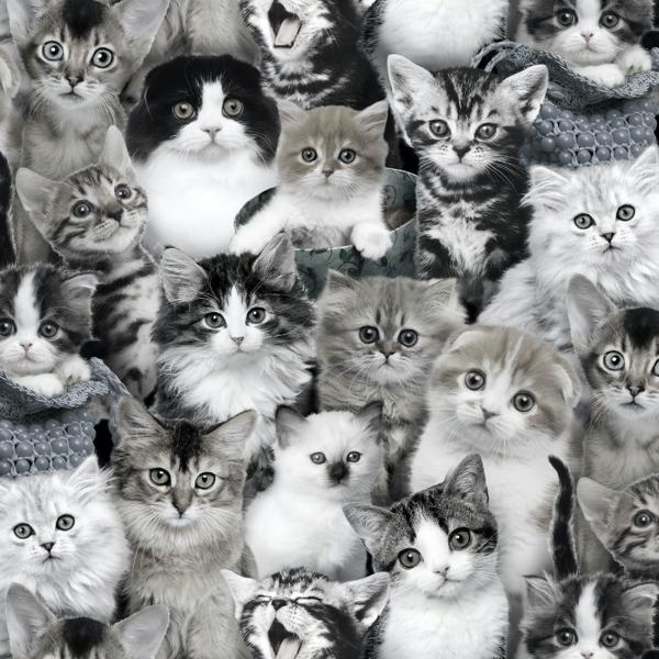 Süße kleine Katzen in grau