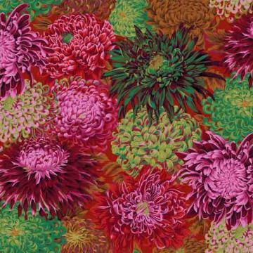 Chrysanthemen SCARLETT von Philip Jacobs