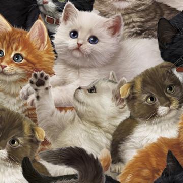 Literary Kitties überall