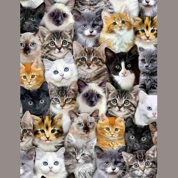 Katzen - überall..