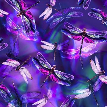 Libellen amethyst - ein Sommertraum