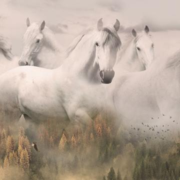 """Panel """"Weiße Pferde"""""""